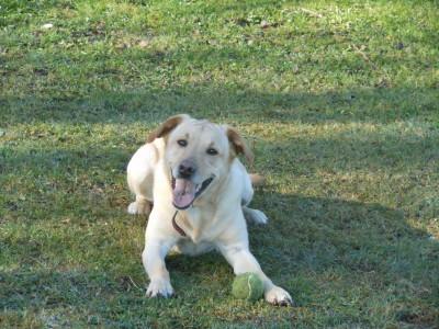 Dog Training Classes Hertfordshire